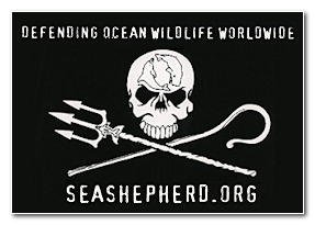 seashepherd.org